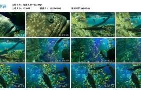 【高清实拍素材】海洋鱼群一组3