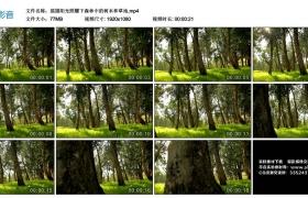 高清实拍视频丨摇摄阳光照耀下森林中的树木和草地