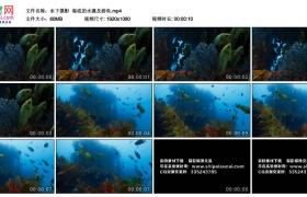 高清实拍视频丨水下摄影  海底的水藻及游鱼
