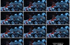 高清实拍视频素材丨木炭燃烧升起橙色火焰