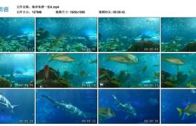 【高清实拍素材】海洋鱼群一组4