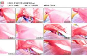 高清实拍视频素材丨特写晴空下彩色经幡随风飘动