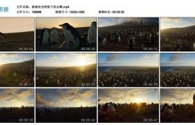 高清实拍视频素材丨极地阳光照射下的企鹅