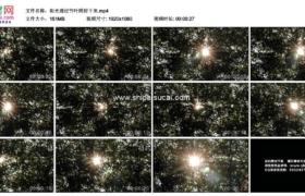 高清实拍视频素材丨阳光透过竹叶照射下来