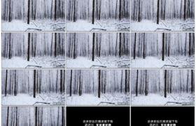 高清实拍视频素材丨冬天森林里雪花飘飞