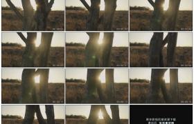 高清实拍视频素材丨向下摇摄阳光照射下草地上树木的树干