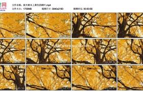 4K实拍视频素材丨秋天树木上黄色的树叶