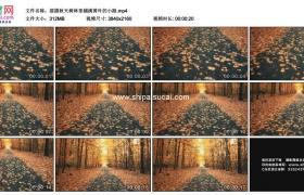 4K实拍视频素材丨摇摄秋天树林里铺满黄叶的小路
