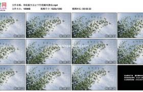 高清实拍视频素材丨仰拍蓝天白云下竹枝随风摆动
