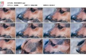 高清实拍视频丨狗狗肖像特写