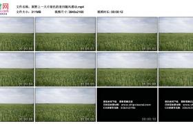 4K实拍视频素材丨原野上一大片绿色的麦田随风摆动