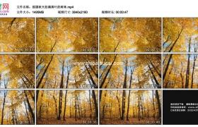 4K实拍视频素材丨摇摄秋天挂满黄叶的树林