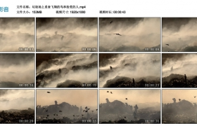 高清实拍视频丨垃圾场上觅食飞翔的鸟和拾荒的人