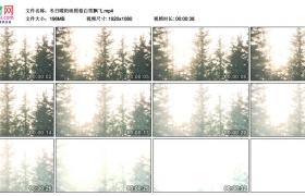 高清实拍视频丨冬日暖阳映照着白雪飘飞