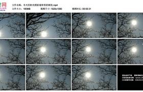 高清实拍视频丨冬天的阳光照射着积雪的树枝