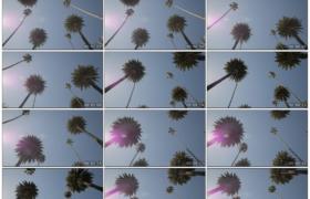 高清实拍视频素材丨仰拍蓝天下移动的棕榈树树梢