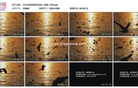 高清实拍视频素材丨夕阳余晖映照的海面上海鸥飞翔