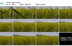 高清实拍视频素材丨摇摄大麦田
