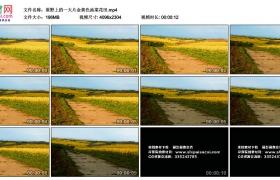 4K视频素材丨原野上的一大片金黄色油菜花田
