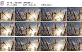 4K实拍视频素材丨夕阳逆光照射下毛茸茸的野草