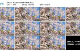 高清实拍视频丨阳光照射下的粉色樱花随风轻摆