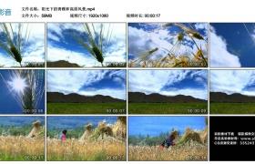 高清实拍视频素材丨阳光下的青稞和高原风景