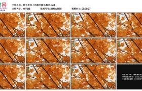 4K实拍视频素材丨秋天树枝上的黄叶随风飘动