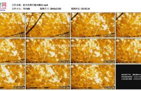 4K实拍视频素材丨秋天的黄叶随风飘动