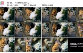 高清实拍视频丨一只小猫咪在树上玩耍