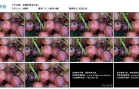 高清实拍视频素材丨摇摄红葡萄