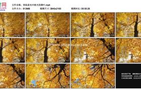 4K实拍视频素材丨仰拍逆光中秋天的黄叶