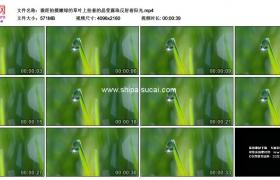 4K实拍视频素材丨微距拍摄嫩绿的草叶上挂着的晶莹露珠反射着阳光