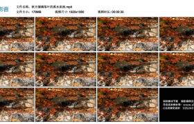 高清实拍视频丨秋天铺满落叶的溪水流淌