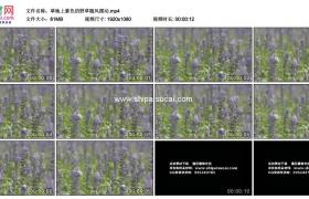 高清实拍视频素材丨草地上紫色的野草随风摆动