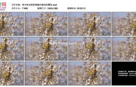 高清实拍视频素材丨春天阳光照射着随风摆动的樱花