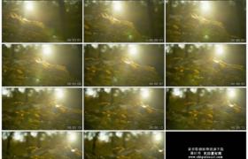 4K实拍视频素材丨移摄树林中阳光照亮叶子的特写镜头