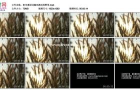 高清实拍视频素材丨阳光透射过随风摆动的野草