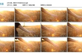 【高清实拍素材】暖阳中手拂麦穗走过