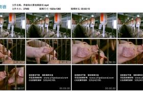 高清实拍视频素材丨养猪场内景