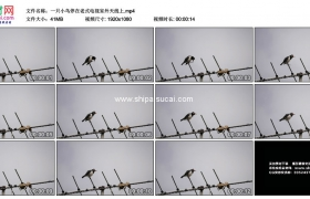 高清实拍视频素材丨一只小鸟停在老式电视室外天线上