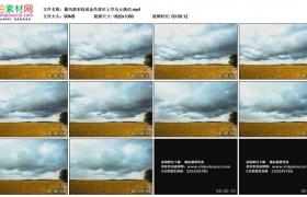 高清实拍视频素材丨暴风雨来临前金色麦田上空乌云涌动