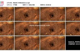 高清实拍视频素材丨蚂蚁在巢穴外进进出出