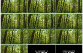 4K实拍视频素材丨摇摄绿色森林里的树木