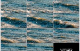 高清实拍视频素材丨海鸥在阳光照射着翻着波浪的海面上飞翔