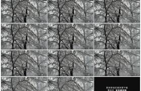 高清实拍视频素材丨冬天的树枝上积雪飘落
