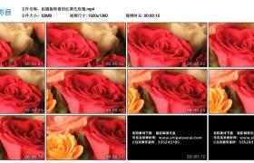 高清实拍视频丨拍摄旋转着的红黄色玫瑰