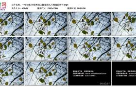 高清实拍视频素材丨一叶知秋 仰拍树枝上挂着的几片稀疏的树叶