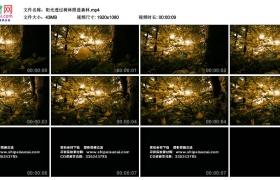 高清实拍视频素材丨阳光透过树叶照进森林