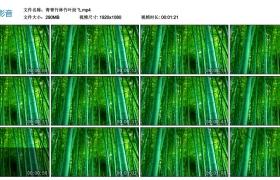 高清动态视频丨青青竹林竹叶纷飞
