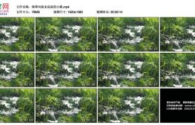 高清实拍视频丨绿草间流水淙淙的小溪